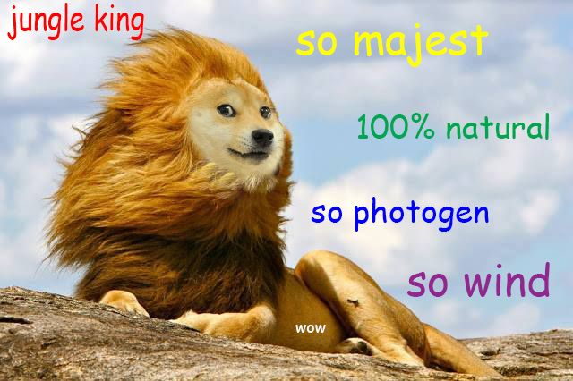 100 magest?w=700 oh wow, so doge the meme of the day trigger plug,So Much Wow Meme